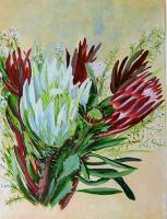Birds And Floral - Banksias - Oils