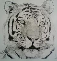Wild Animals - The Tiger Dream Warden - Ink And Graphite
