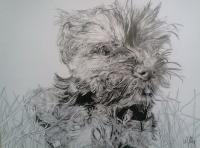 Pet Portraits - Little Betty - Ink And Graphite