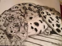 African Dreams - Lazy Leopard - Charcoal On Paper