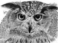 Birds - Owl - Pencil  Paper