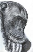 The Thinker - Pen Ank Ink Drawings - By Robert Villazante, Endangered Species Drawing Artist