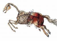 Deconstructing The Horse - Marker Drawings - By Janelle Dimmett, Illustration Drawing Artist