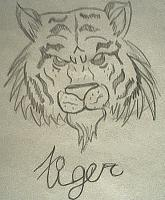 Drawing - Tiger - Pencil