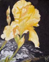 Flowers - Yellow Iris - Oil