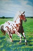 Southwest And Western - The Red Appaloosa - Acrylic On Canvas