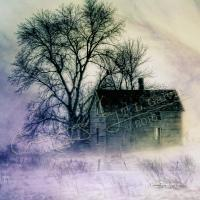 Winter Shelter - Digital Mixed Media - By Terrie Galvin, Realism Mixed Media Artist