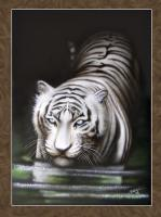 White Tiger - Acrylics And Pigmented Ink Paintings - By Dallas Nyberg, Realism Painting Artist