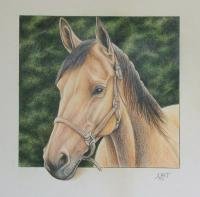 Recent Work - Horse - Color Pencil