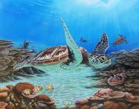 Sea Turtle - Wicked Acrylics Paintings - By Dallas Nyberg, Realism Painting Artist
