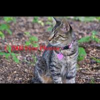 Cat In Spring - Digital Photograph Luster Prin Photography - By Josh Mcgrath, Animals Photography Artist