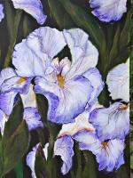 Iris Awakening - Acrylic Paintings - By Cynthia Clark-Mahan, Realism Painting Artist