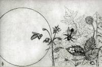 Wild Honey Bee World - Etching Printmaking - By Aoife Valley, Realism Printmaking Artist