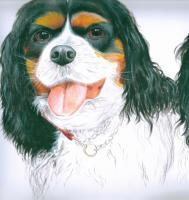 Pets - Barrys Dog - Acrylic